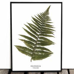 Botaniczny plakat PAPROĆ...