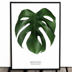 Botaniczny plakat MONSTERA...