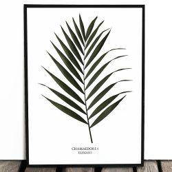 Botaniczny plakat CHICO...