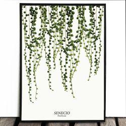 Botaniczny plakat STARZEC...