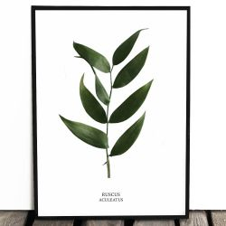 Botaniczny plakat RUSCUS...